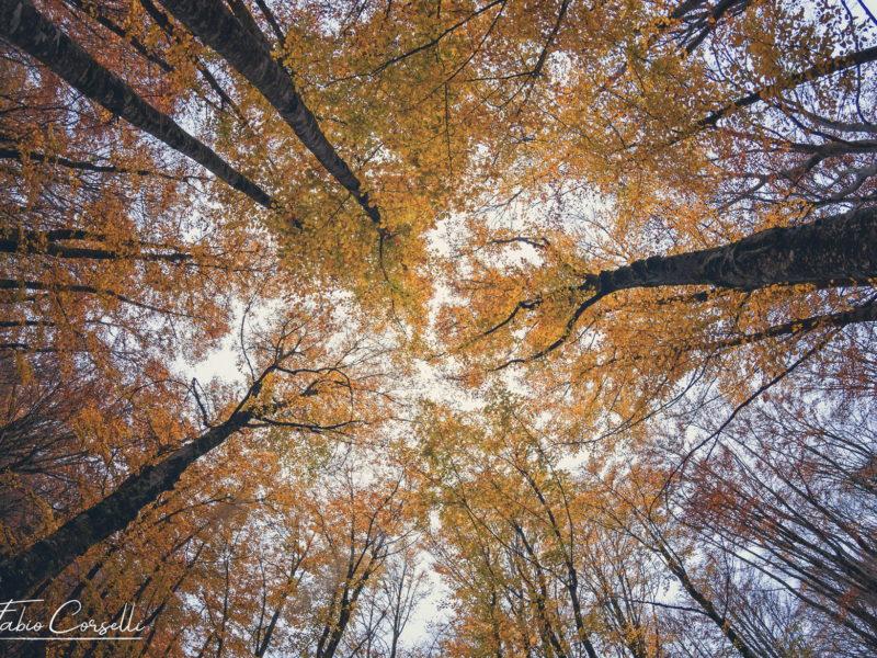 Fabio Corselli - Foliage a Piano Battaglia