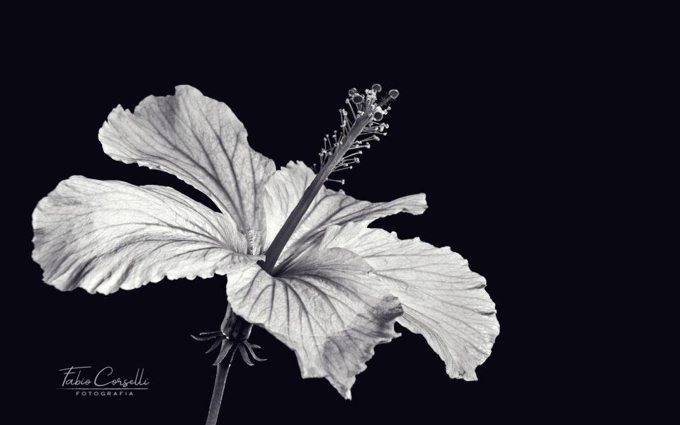 Fabio Corselli Fotografia - Ciuri Ciuri